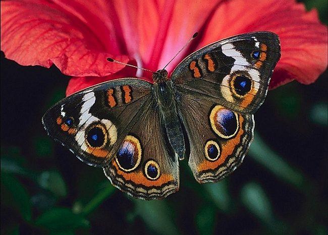 Экскурсия в парк бабочек (3 часа). Рекомендуем для 2-4 класса