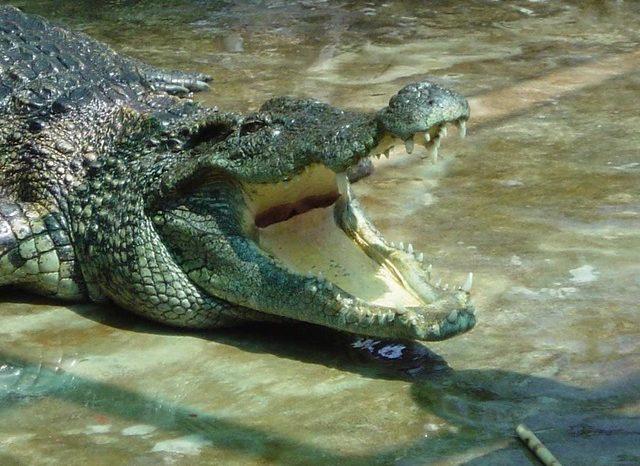 Экскурсия на крокодиловую ферму «Крокодилвиль»