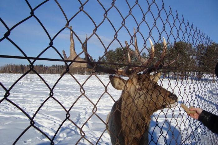 Висим (родина М.-Сибиряка)+ хаски, олени и Уральские горы
