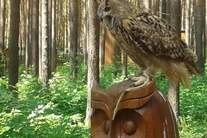 Экскурсия в центр реабилитации хищных птиц «Холзан» (школьные группы)